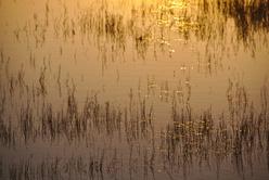 Reflets du soleil couchant dans l'Etang de l'Or