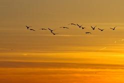 Vol de fin de journée