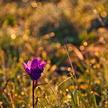 Fleur à contrejour