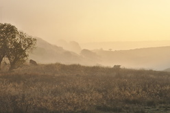 Brume du matin en Margeride