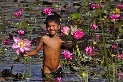 Le petit cueilleur de fleurs de lotus