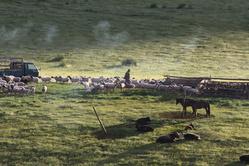 Parc à moutons au petit matin