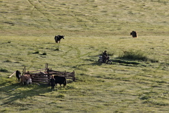 Parc à bestiaux