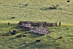 Parc et troupeau