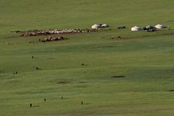 Campement d'éleveurs au coeur de la steppe