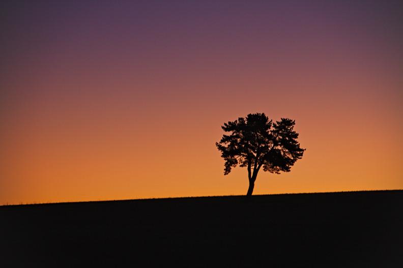 L'arbre du Causse - Aurore