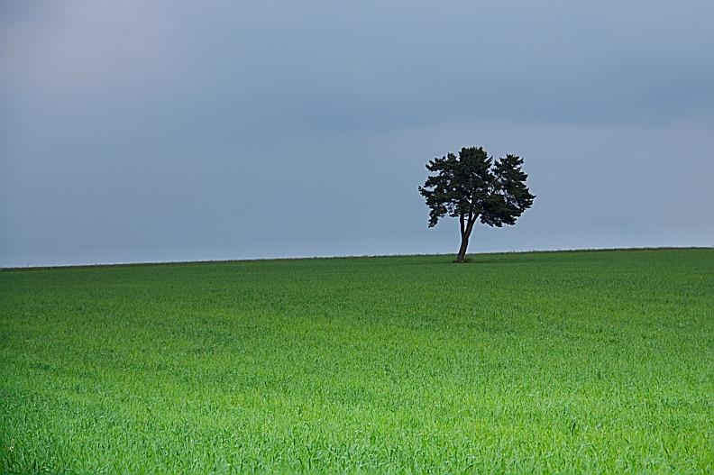 L'arbre du Causse - Eté