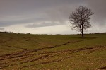 Le champ raviné