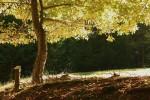 Dans le bois de la Loubière